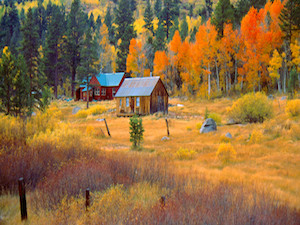 "Fall Foliage Photo on Canvas - 16"" x 32"" Item #: 152023823238"
